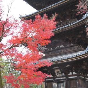 紅葉(もみじ)狩り - 京都(6)