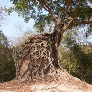 カンボジアの世界遺産を巡る旅(3)