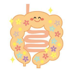 シリカの免疫強化の理由は、腸管免疫!腸管免疫とは何?