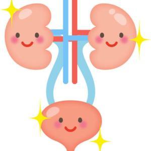 アスタキサンチンは腎臓にも効果で酸化ストレスを減らす!