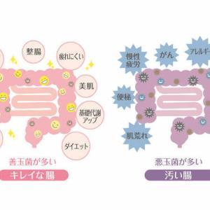 温活で腸を温める方法!腸温活のコツ!お腹を冷やさない方法