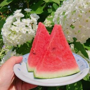 スイカの効果!シトルリンで抗酸化作用も、皮も食べて夏バテ予防!