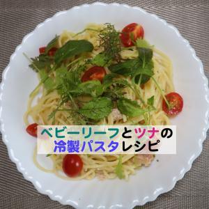 ベビーリーフのレシピ:ツナとベビーリーフとバジルの冷製パスタ