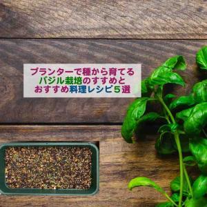 プランターで種から育てるバジル栽培のすすめとおすすめ料理レシピ5選