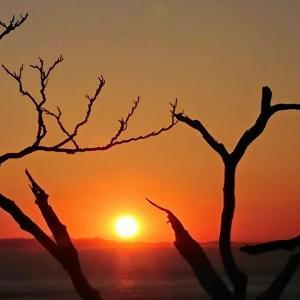 夕陽  #223