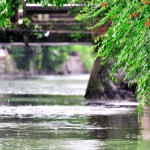 雨の柳川船下り  #236