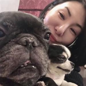 【今くら】広瀬香美の犬種は何?チワワとフレンチブルドッグになめられてる?