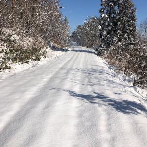 Virgin Snow Running