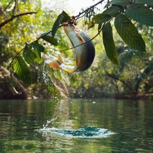 【驚愕!】 木の実を食べる魚!!