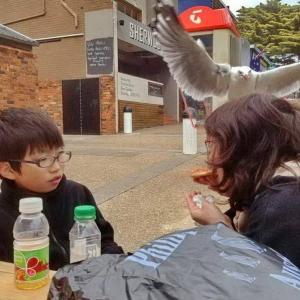 カモメにピザを奪われる1秒前の写真