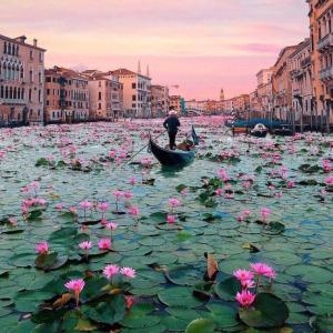 ヴェネチアにスイレンが咲き乱れる!