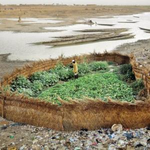 とあるアフリカの川べりの畑