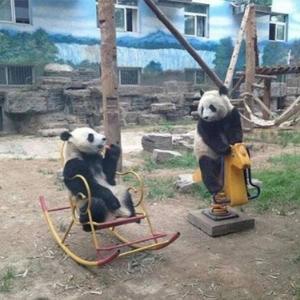 パンダの会話が伝わってくる?