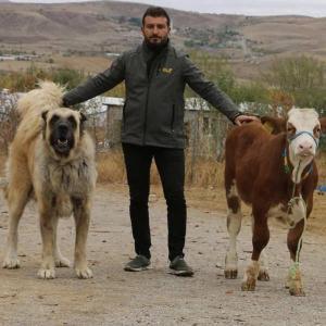 仔牛ほどの大きさがあるイヌ