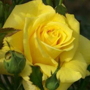 世界平和へ一輪献花! 令和元年 11月6日水曜日