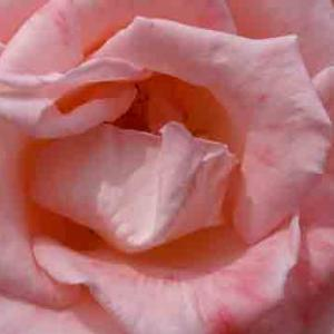 世界平和へ一輪献花! 令和元年11月5日 火曜日