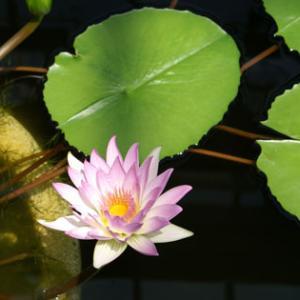 世界平和へ一輪献花! 令和元年 11月3日 日曜日 晴