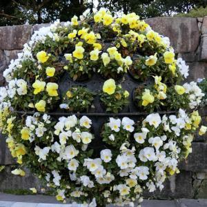 世界平和へ一輪献花!令和 元年 10月30日 晴