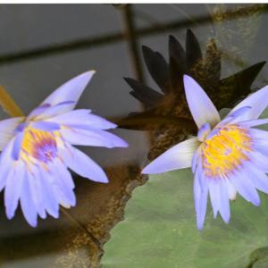 世界平和へ一輪献花! 令和元年 7月18日 木曜日