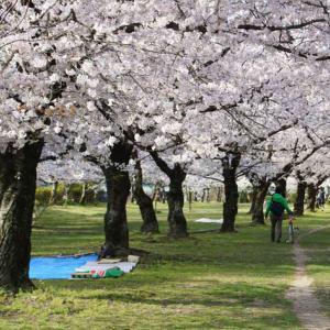 世界平和へ一輪献花! 平成31年4月3日 水曜日