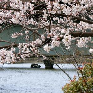 世界平和へ一輪献花! 平成31年4月5日 金曜日