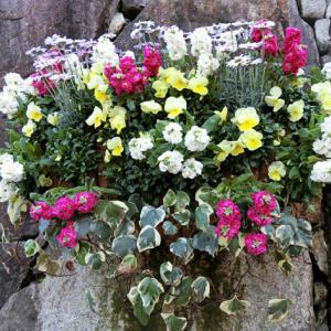 世界平和へ一輪献花! 平成31年4月8日 月曜日