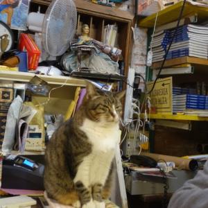 【イタリアに行こう♪18】ネコのいる本屋さん。リブレリア・アクア・アルタ