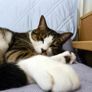 猫はどんなところもカワイイのです。足の裏だって