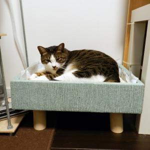 猫さんのベッドはダブルベッドがよいですな