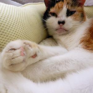 猫さんは四足なのに手と足があります