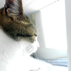 静かな埼玉、静かな猫屋敷