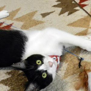 ウチの猫さんに商品レビューは出来ません。