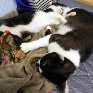 猫さんは本日もオヤスミです。