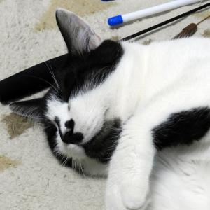 白黒ねこさん。寝がえりはうったほうがよいですよ。