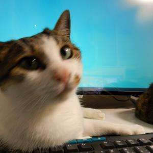 猫屋敷さんのブログは猫さんに見張られながら作られています。