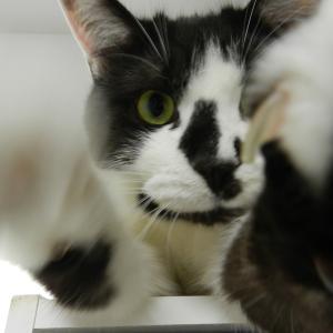 猫さん、ご機嫌ナナメでカメラをギュ~!でも猫として そこは猫パンチでしょ!