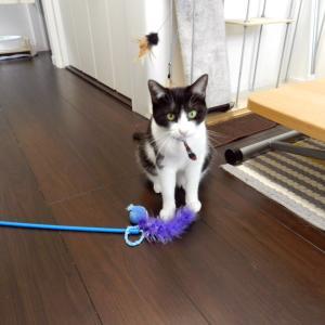猫さんとお掃除は相容れない。