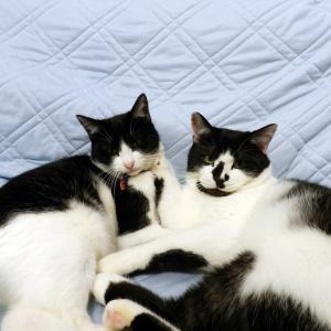 強欲な猫屋敷さんはツイートも見てほしい!