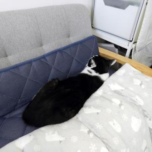 猫さんは隙間が大好き、スキマスキー!