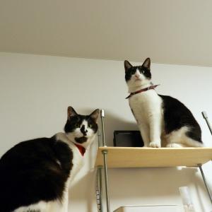 猫さんの隙間に猫屋敷さんの生活はアリマス
