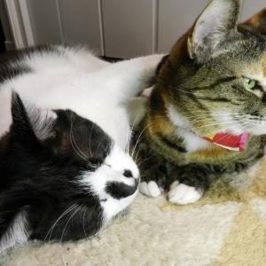 見張る猫さん、寝る猫さん。