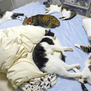 おやすみ猫さん、またあした。