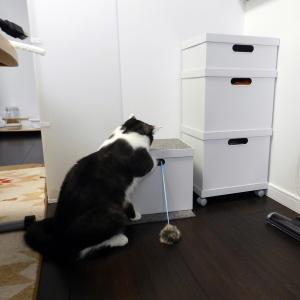 猫階段は宝物の隠し場所