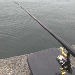 順番からすると釣れる日