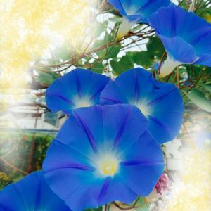 季節の花のちょこっとコーデ