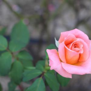 1992年10月30日、「香りの記念日」