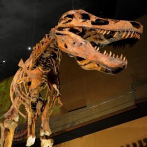 今日は恐竜の日