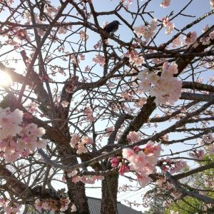 春暁(しゅんぎょう)🕊️