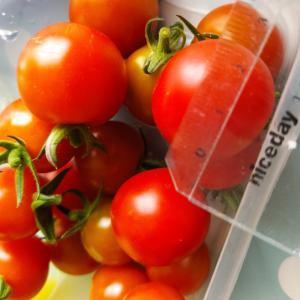ミニトマトの季節