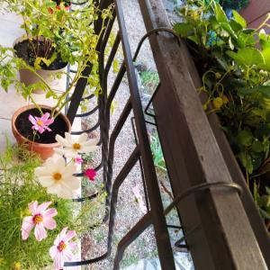 Potager sur Terrasse テラスで家庭菜園